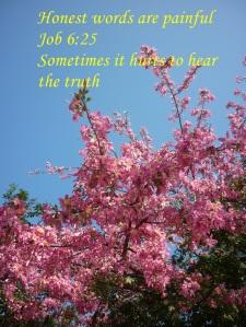 blue sky behink pink blossoms