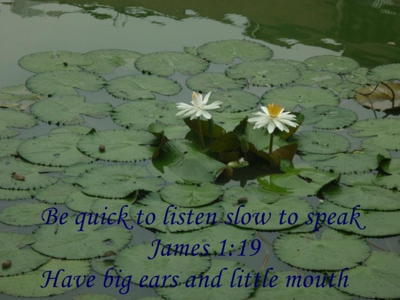 delightful panoramic water dance