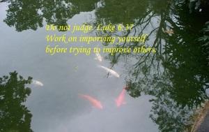 Swimming lucky fish
