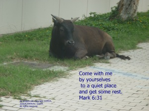 REST WITH JESUS
