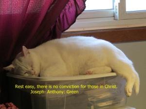 no-conviction