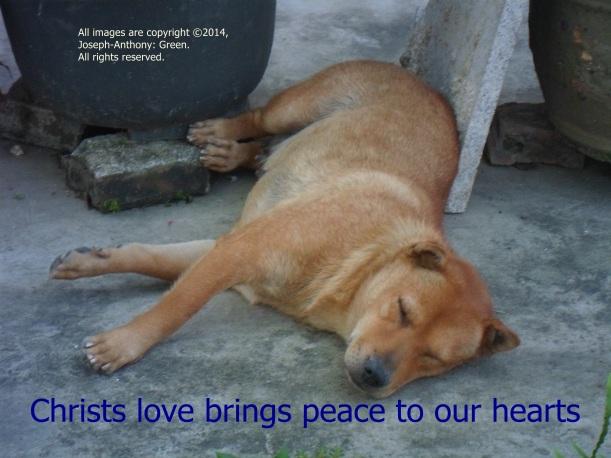 CHRIST'S PEACE