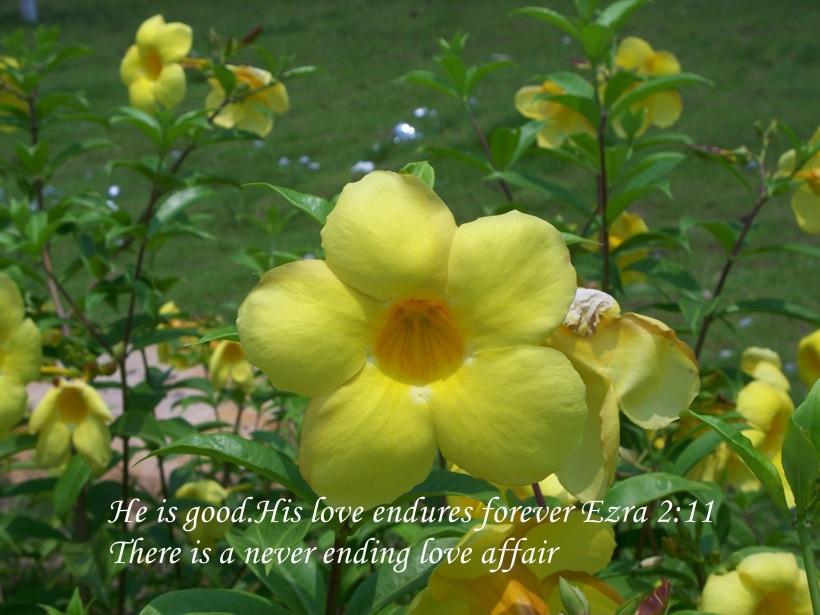 NEVER ENDING LOVE AFFAIR