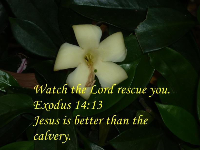 gods rescue