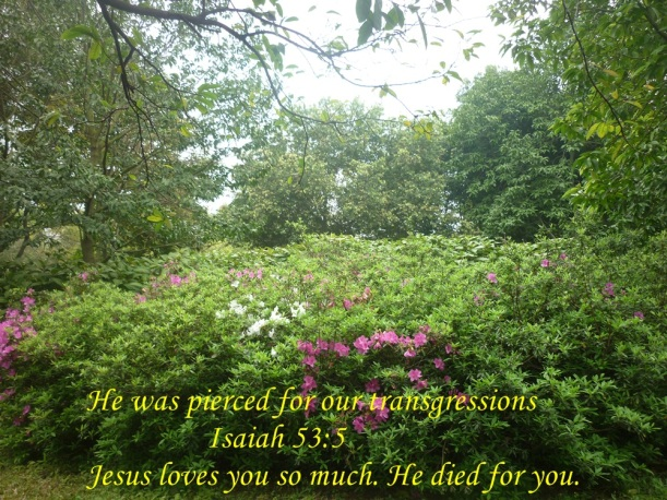 jESUS'S LOVE
